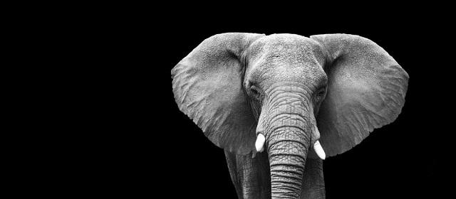 elephant-640x280